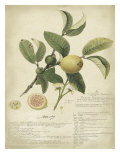 Descube Botanical I Premium Giclee Print by A. Descube