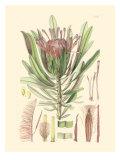 Floral Passion IV Art par Samuel Curtis