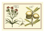 Garden Botanica IV Prints
