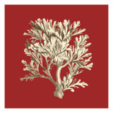 Coral on Red IV Prints
