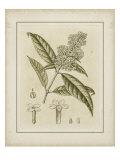 Tinted Botanical II Prints by Samuel Curtis