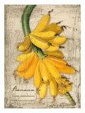 Banana Giclee Print by Kate Ward Thacker