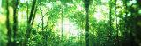 Trees in a Rainforest, Arenal Region, Costa Rica Fotografisk trykk av Panoramic Images,