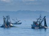 California, Monterey, Fishing Boats, USA Stampa fotografica di Alan Copson
