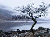 Solitary Tree on the Shore of Loch Etive, Highlands, Scotland, UK Photographic Print by Nadia Isakova