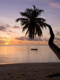 Seychelles, Mahe Island, Horizontal Palm, Fairyland Beach, Dawn Fotografisk tryk af Walter Bibikow