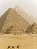 Camels Pass in Front of the Pyramids at Giza, Egypt Lámina fotográfica por Julian Love