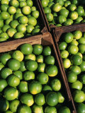 Boxes of Limes, Oxkutzcab Market, Yucatan, Mexico Fotografisk tryk af Paul Harris