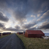 Red Huts and Sheep at Sunset on Coast, Lofoten Islands, Norway, Scandinavia, Europe Photographic Print by  Purcell-Holmes
