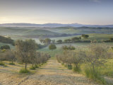Early Morning View across Val D'Orcia from Field of Olive Trees, San Quirico D'Orcia, Near Pienza Fotografisk tryk af Lee Frost