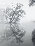 Trees Amidst Fog Lámina fotográfica por Diane Miller
