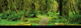 Road through Temperate Rain Forest, Olympic Peninsula Plakater af John Lawrence