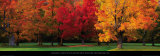 Maple Trees in Autumn, White Mountains, New Hampshire Poster von Tom Mackie
