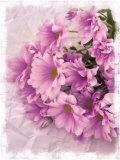 Still Life Photograph, Chrysanthemum Flowers Photographic Print by Abdul Kadir Audah