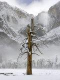 Yosemite Falls  Yosemite National Park  California