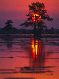 Cypress Swamp at Sunrise  Texas  USA
