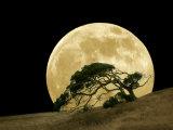 Windswept Live Oak Tree and Rising Full Moon at Night Fotografie-Druck von Diane Miller