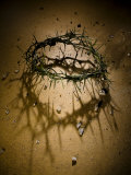 Crown of Thorns with Large Shadow and Pieces of Rock Fotoprint van Joshua Hultquist