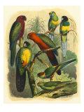 Cassel: Tropenvögel III Giclée-Premiumdruck von  Cassel