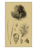 Arbor Study V Posters