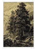Arolla Pine Affiches par Ernst Heyn