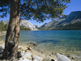 Shore of Tenaya Lake Photographic Print by Marc Moritsch