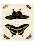 Schmetterlings-Allerlei III Giclée-Premiumdruck