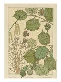 Hazel Tree Poster von M.P. Verneuil