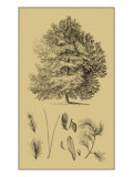 Arbor Study IV Affiches