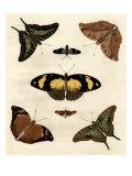 Schmetterlings-Allerlei IV Giclée-Premiumdruck