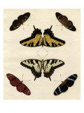 Schmetterlings-Allerlei II Giclée-Premiumdruck