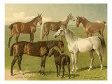 Horse Breeds I Kunstdrucke von Emil Volkers