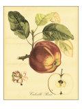 Petite Tuscan Fruits I Láminas