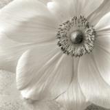 Poppy Study II Affiches par Sondra Wampler