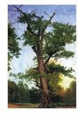 Pioneers of The Forest Affiches par Albert Bierstadt