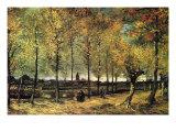 Lane with Poplars Plakater av Vincent van Gogh