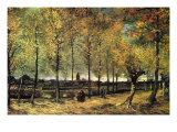 Lane with Poplars Poster by Vincent van Gogh