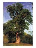 Pioneers of The Forest Plakat af Albert Bierstadt