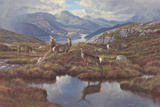 Stags At Wester Ross Limited Edition Print on Canvas by Peter Munro