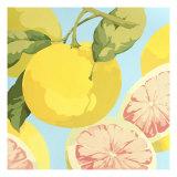 Fresh Grapefruits Stampa giclée premium di Martha Negley