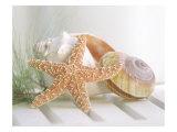 Cali Starfish II Giclée-Premiumdruck
