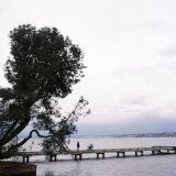Woman Stands on Dock Next to Pine Tree, Lake Washington, Seattle, Washington State, Usa Photographic Print by Aaron McCoy