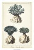 Coral Species IV Giclee Print