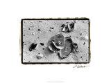 Sand Treasures III Premium Giclee Print by Laura Denardo