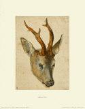 Head of a Roebuck Impressão colecionável por Albrecht Dürer