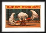 Adams Bros. International Circus Pósters