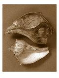Sensual Shells II Print by Renee W. Stramel