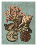 Shell and Coral on Aqua I Posters