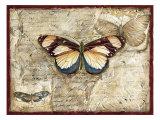 Poetic Butterfly I Prints by Chariklia Zarris