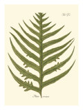 Small Antique Fern VIII Posters
